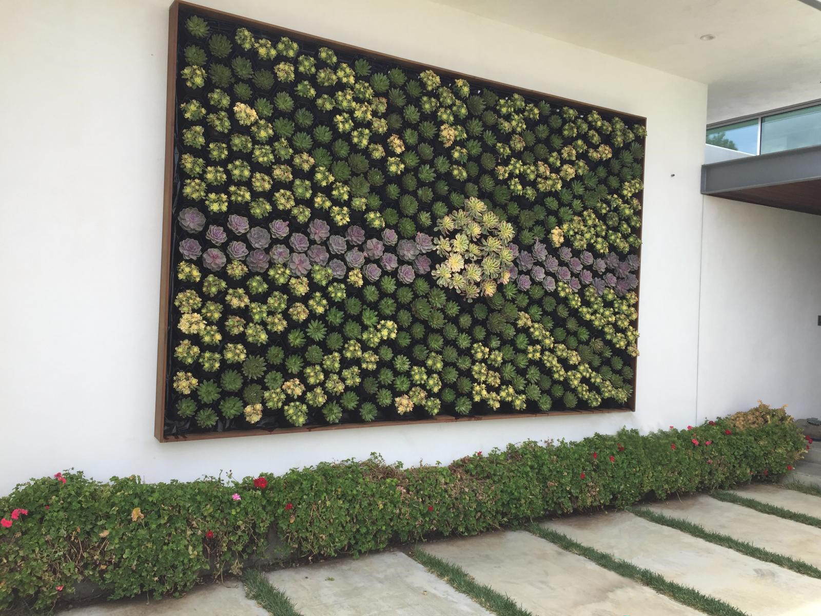 Succulent Green Wall