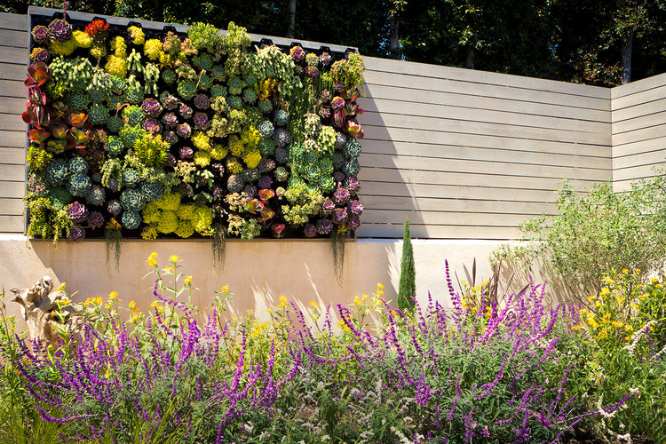 Colorful succulent wall in a backyard. Yellow and purple flowers fill the area in front of it.