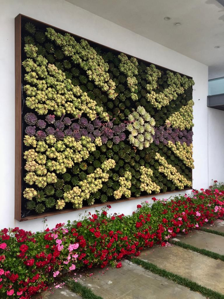 A succulent wall laid out into a patterned design on an outdoor wall.